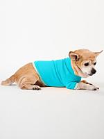 Aqua & Lime Baby Rib Dog T