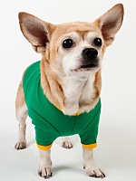 Kelly Green & Gold Baby Rib Dog T