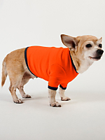 Orange & Royal Blue Baby Rib Dog T
