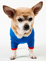 Royal Blue & Red Baby Rib Dog T