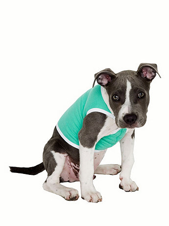 Mint & White California Fleece Dog Vest