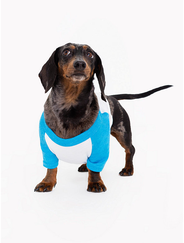 White & Neon Heather Blue Poly-Cotton Dog Raglan