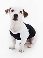 Black & White Poly-Cotton Dog Raglan