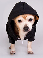 Flex Fleece Dog Zip Hoodie