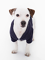 Navy Flex Fleece Dog Zip Hoodie