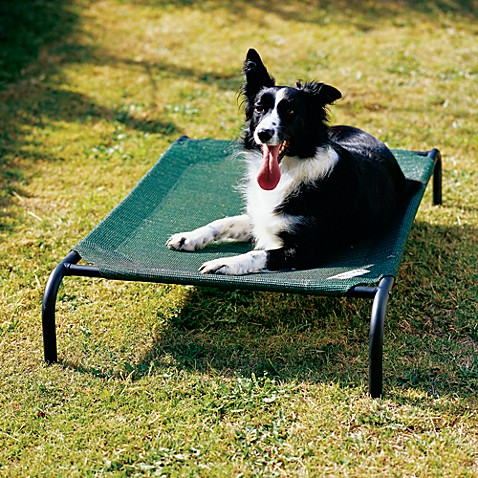 Coolaroo® 26-Inch x 42-Inch Medium Steel Frame Pet Bed