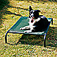 Coolaroo® Steel Frame Pet Bed