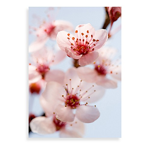 Spring Blossom Canvas Wall Art