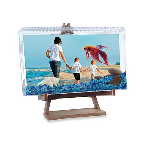 Betta on Display Picture Frame and Easel Tank