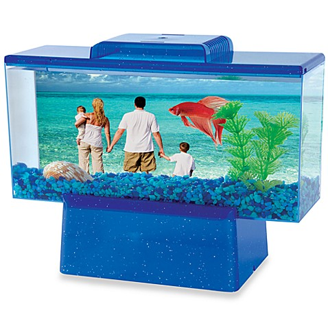 Betta view fish tank bed bath beyond for Betta fish for sale at walmart