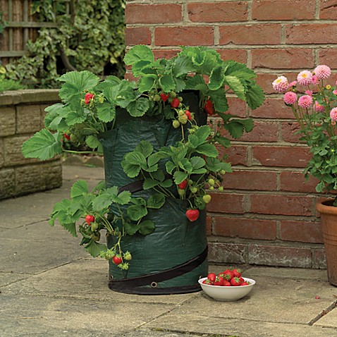 Gardman Strawberry Planter