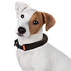 Microdry® Ultimate Luxury Memory Foam Pet Collar