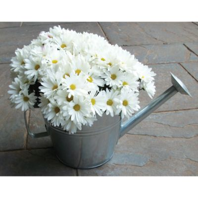 Gardman Galvanized Watering Can Planter