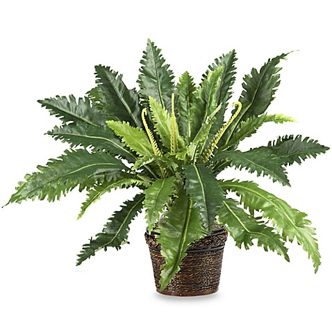 Nearly Natural Marginatum Silk Plant with Lacquered Rope Wicker Pot