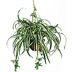Nearly Natural Spider Silk Plant Hanging Basket