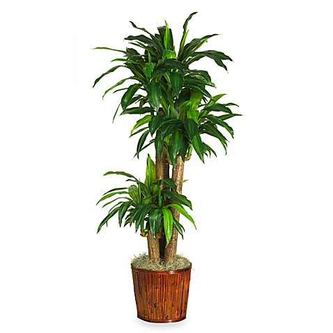 Nearly Natural Dracena Silk Plant with Basket
