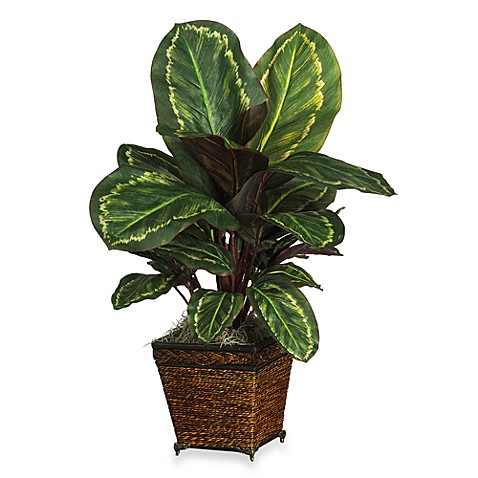 Nearly Natural Maranta Silk Plant with Basket