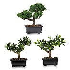 Nearly Natural 8 1/2-Inch Bonsai Silk Plant Collection (Set of 3)