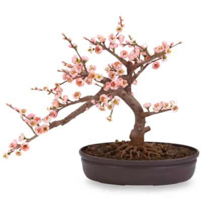 Nearly Natural Cherry Blossom Bonsai Tree