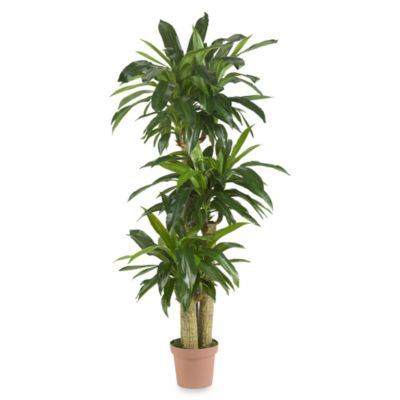 Nearly Natural Real TouchIndoor/Outdoor 57-Inch Tropical Silk Corn Stalk Dranaena Plant