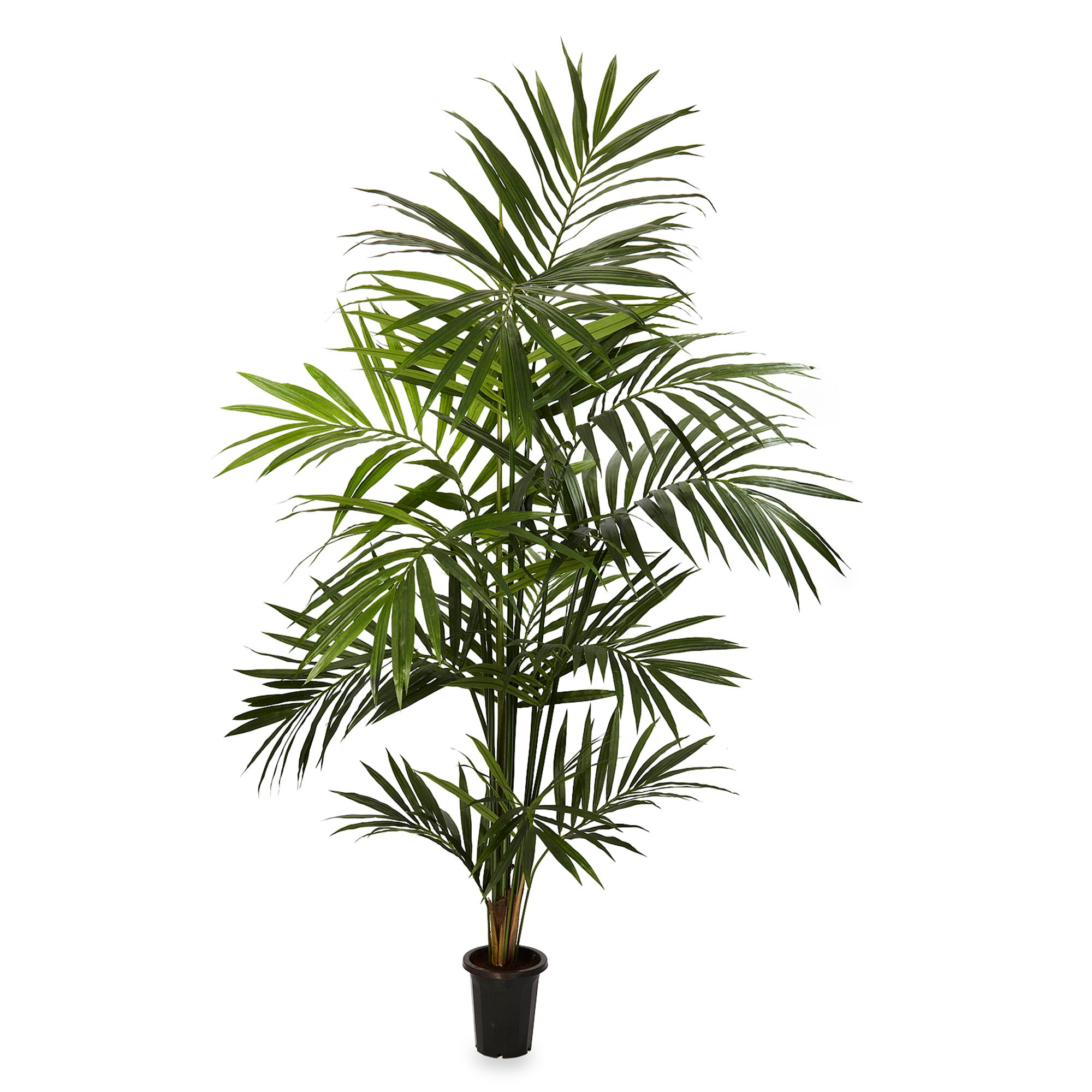 Silk Palm Trees Palm 7-foot Silk Tree With