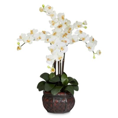 Nearly Natural Phalaenopsis Silk Flower Arrangement with Decorative Vase in Cream