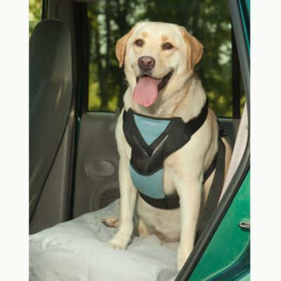 Bergan® Medium Travel Safety Harness