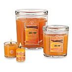 Colonial Candle® Papaya Punch Scented Candles