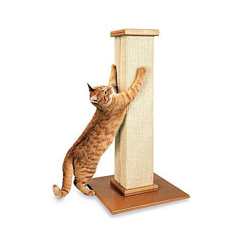 Bed Bath And Beyond Scratching Post