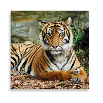 Regal 16-Inch x 16-Inch Printed Canvas