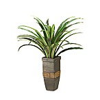 D & W Silks Dracaena in Square Wooden Planter