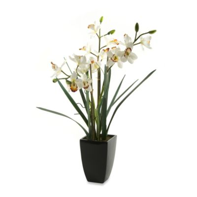 D & W Silks 38-Inch Tall White Orchids in Black Ceramic Planter
