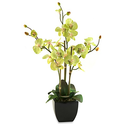 D & W Silks 24-Inch Tall Green Orchids in Black Ceramic Planter