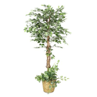 D & W Silks 6-Foot Green Ficus in Rattan Planter