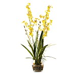 D & W Silks 32-Inch Tall Yellow Orchids in Glass Dish