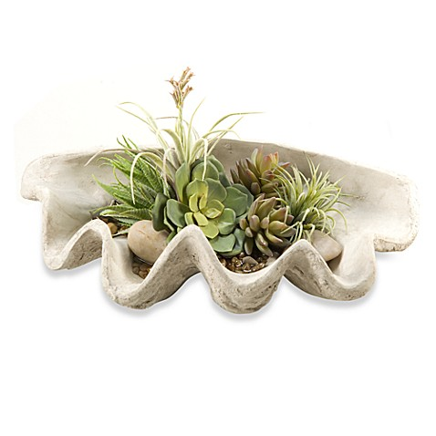 D & W Silks Half Clam Shell with Agave and Echeveria