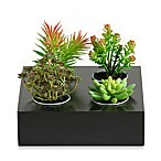 D & W Silks Four Succulent Plants