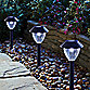 Solar Pathway Lights in Black (Set of 6)
