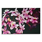 Pink Orchid Wall Art