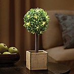 15.75-Inch Battery Operated LED Lighted Boxwood Topiary