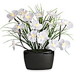 20-Inch Brown-Wrapped White Orchid LED Lighted Branch Arrangement