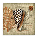 Martinique Shell Postcard Wall Art