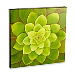 Graham & Brown Multi-Leaf Agave Laquer Wall Art