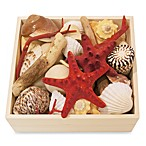 Coastal Collection Potpourri Square Wood Box