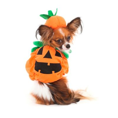 Pumpkin Dog Costume Size Large in Orange