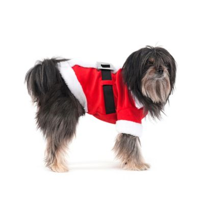 Santa Claus Dog Costume in Red/White