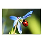PrintCopia Collection Seven-Spot Ladybird Canvas Print