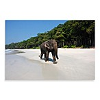 PrintCopia Collection Indian Elephant (Elephas Maximus Indicus) Canvas Print