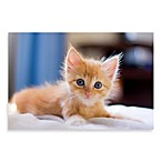 PrintCopia Collection Cat with Blue Eyes Canvas Print