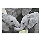 PrintCopia Collection African Elephant Calves
